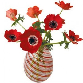Flat Flowers Anemone rood