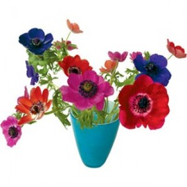Flat Flowers Anemone blauw