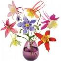 Flat Flowers Aquilia