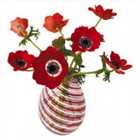 Flat Flowers Greetings Anemone rood