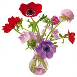 Flat Flowers Greetings Anemone roze