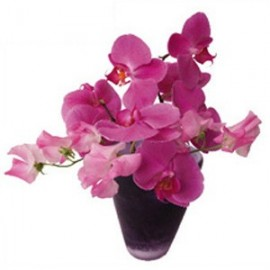 Flat Flowers Greetings Orchidee roze.