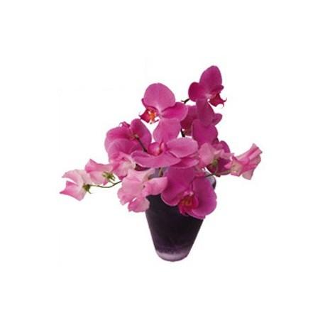 Raamstickers Orchidee roze.