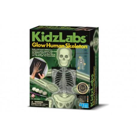 4M Bouwpakket Menselijk Skelet