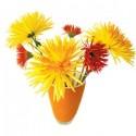 Flat Flowers Chrysant