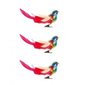 Set van 3 Regenboog Vogels op Clip