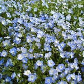 Bosliefje www.allesinwonderland.nl