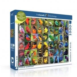 Puzzel Rainbow of Birds1000st