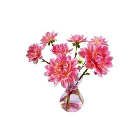 Flat Flowers Dahlia Roze