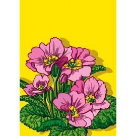 Ansichtkaart Primula