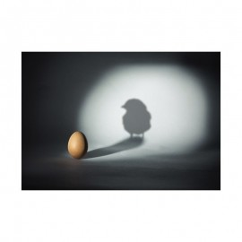 Fotokaart Egg and Chick