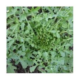 Rucola 'Selvatica' groentezaad