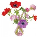 Raamsticker XL Anemone roze