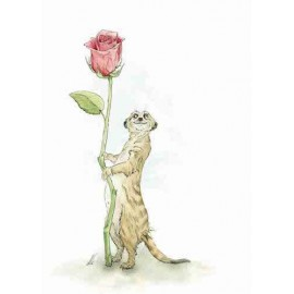 Meerkat' Lovin