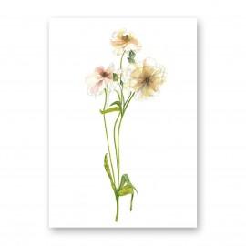Moniek Peek Ranunculus Butterfly
