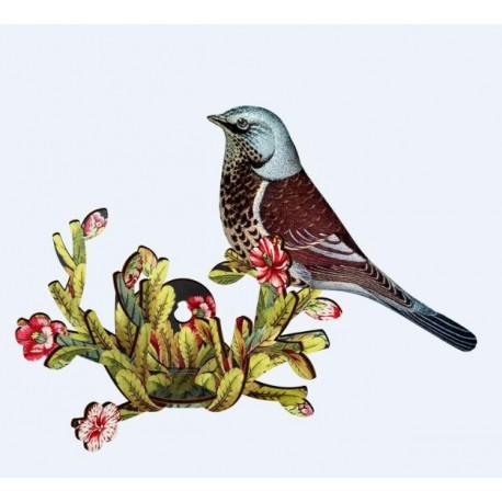 Vogel Latin Lover