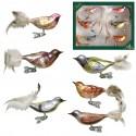 Set van 6 Wintervogels op Clip