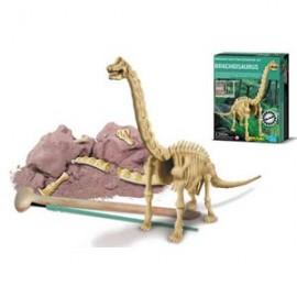 Skelet bouwpakket 'Brachiosaurus'