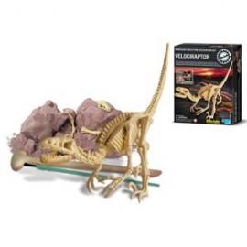 Skelet bouwpakket 'Velociraptor'