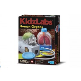 4M Menselijke Organen Pakket